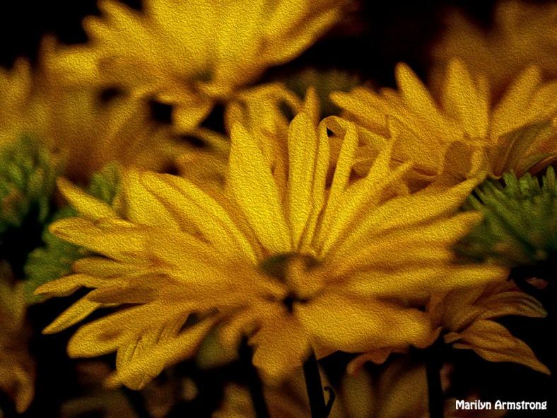 72-bouquet-oil-0630_08