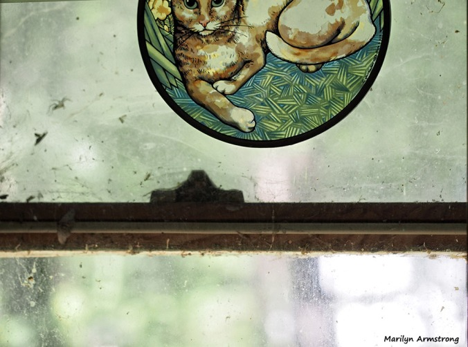 72-cat-window-oddball_11
