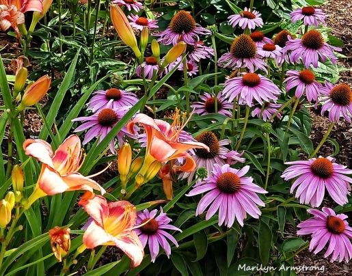 72-DF_Garden_40