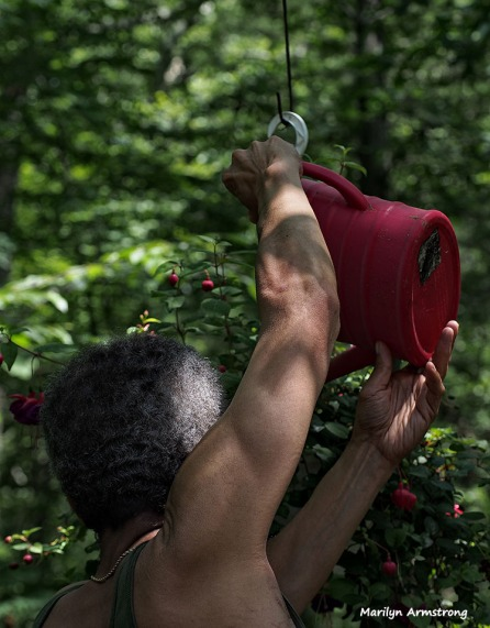 Garry watering the fuchsia