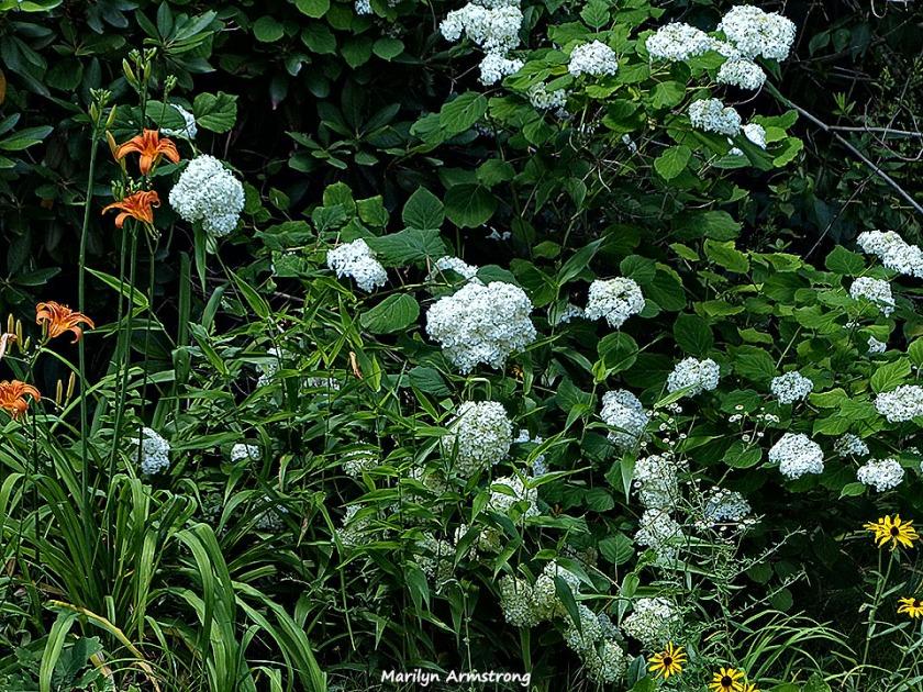 72-July-Garden-071015_11