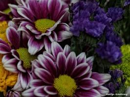 Macro flowers sun OIL 021