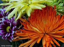 Macro flowers sun 005