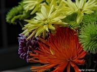 Macro flowers sun 017