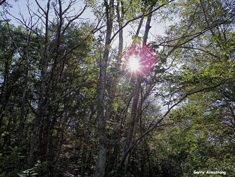 72-Sun-rays-GA-7-31-Q7_43