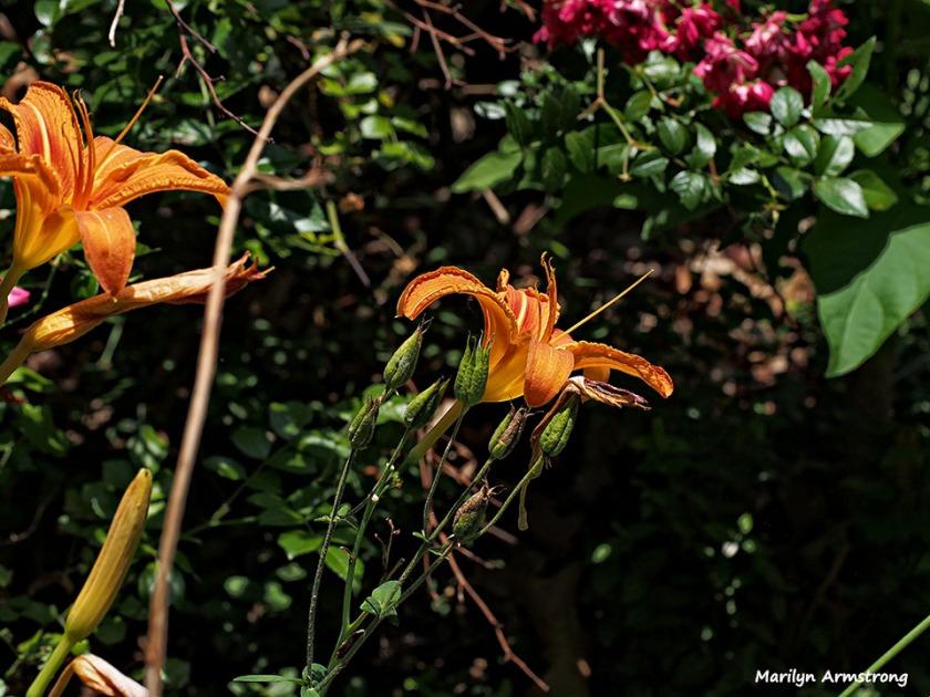 wild garden 15