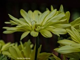 yellow Macro flowers sun 022