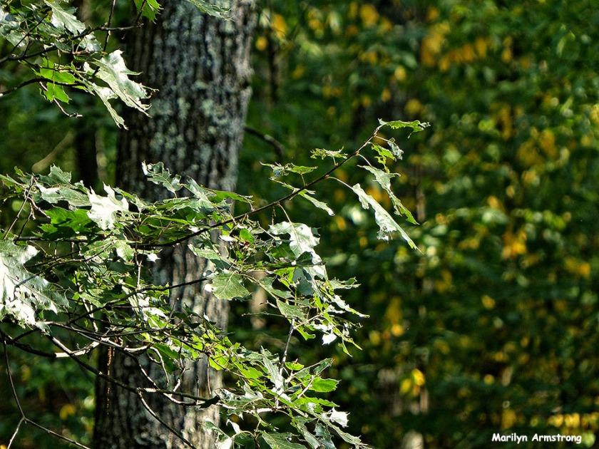 72-Almost-Autumn_18