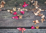 72-almost-fall-deck-shots_27