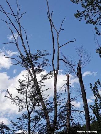 72-Sky-Amherst-River_076