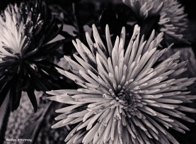 72-BW-Painted-Flowers_06