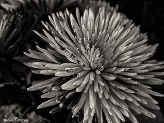 72-BW-Painted-Flowers_10