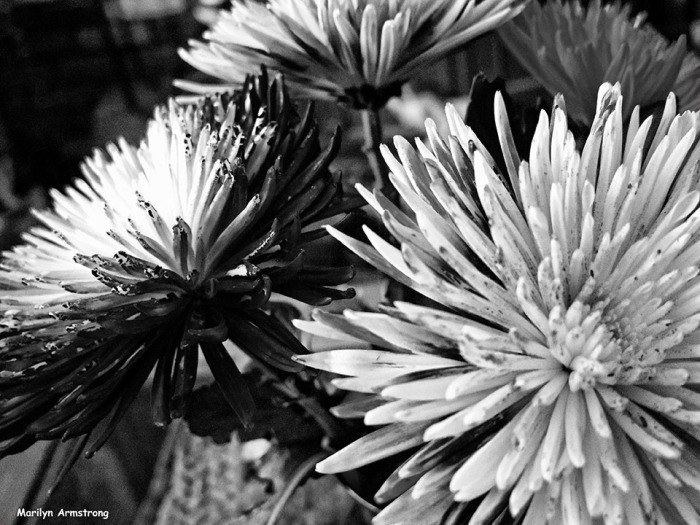 72-BW-Painted-Flowers_12