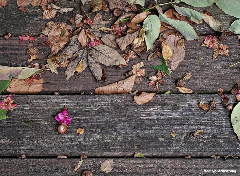 72-Deck-October-5-Fuchsia_18