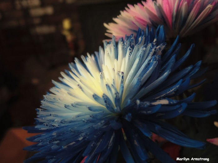 72-V2-Painted-Flowers_07