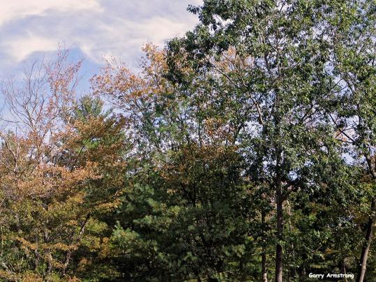 72-Aldrich Creek-GAR_005