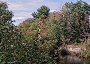 72-Aldrich Creek-GAR_011