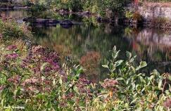 72-Aldrich Creek-GAR_053