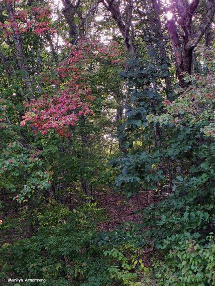 72-Aldrich Creek_053