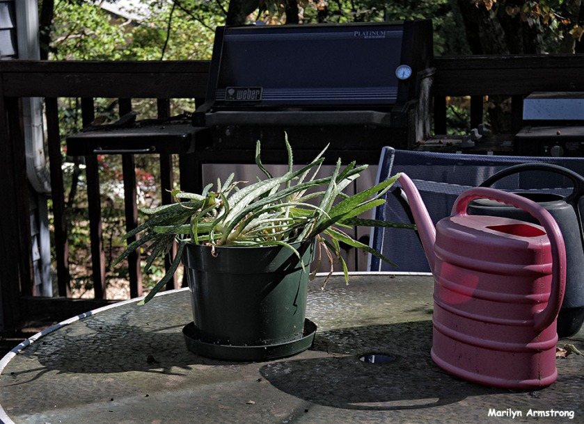 Still life with aloe and watering cans