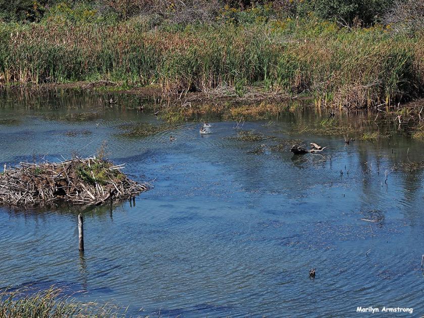 72-beaver-dam-cooperstown-ma_104