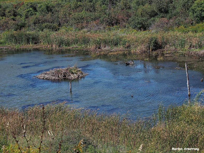 72-beaver-dam-cooperstown-ma_117