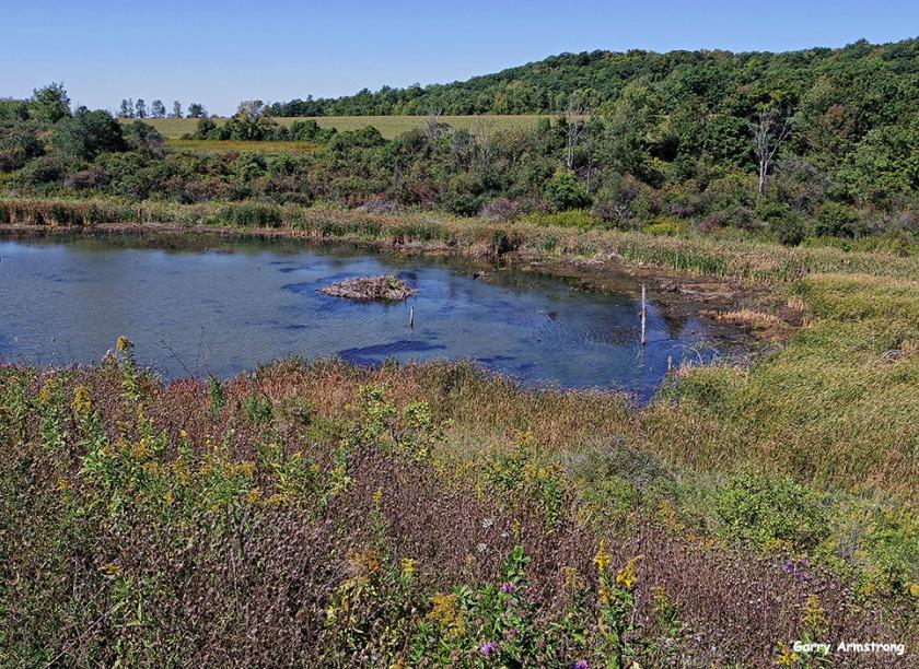 72-Beaver-Pond-OIL-Cooperstown-GA_127