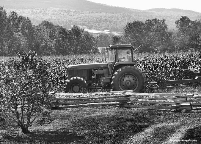 72-bw-harvest-corn-0918_17
