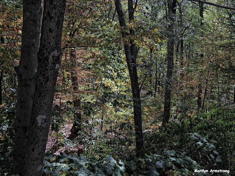 72-Early Autumn-Woods-0905_20