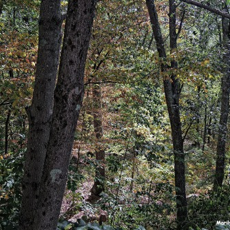 72-Early Autumn-Woods-0905_21