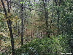 72-Early Autumn-Woods-0905_22