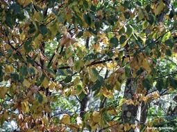 72-Early-Autumn-Woods_05