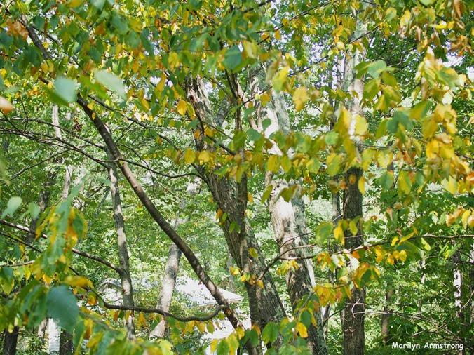 Early Autumn September 11