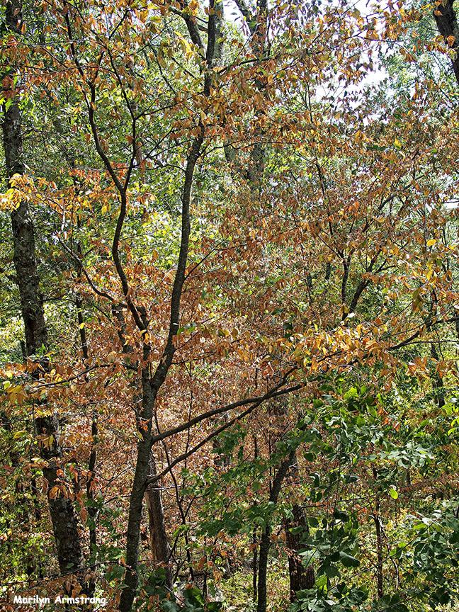 72-foliage-vertical-sep9