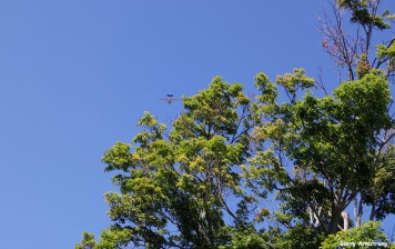 72-Glider-Cooperstown-GA_075