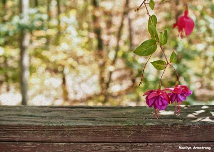 72-oil-fuchsia-foliage-sep9_26