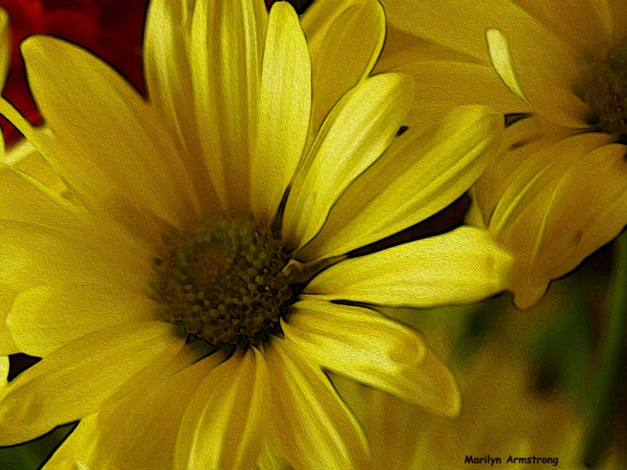 72-oil-yellow-bouqet_05 macro