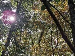 72-Sun-on-Woods-Deck_12