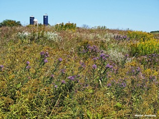 72-wildflowers-cooperstown-ma_076