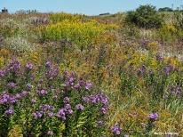 Wildflowers in an empty field in upstate New York