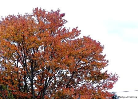 72-Aldrich-Foliage-1013_008