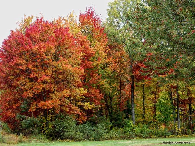 72-Aldrich-Foliage-1013_013
