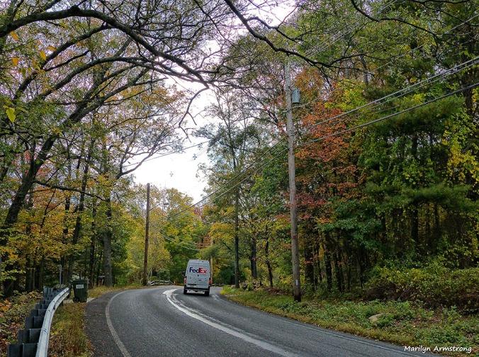 72-Aldrich-Foliage-1013_030