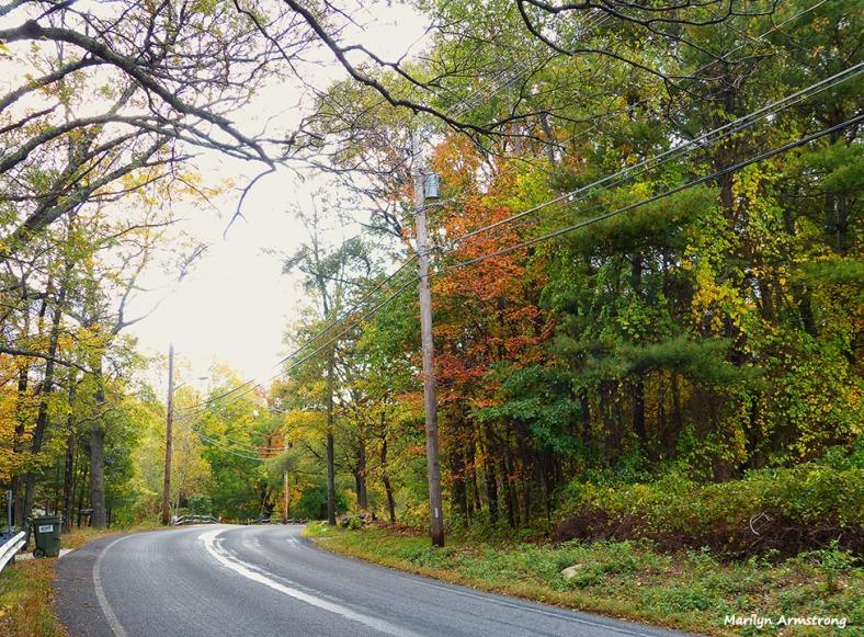 72-Aldrich-Foliage-1013_034