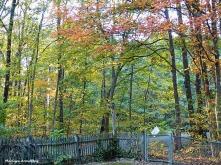 72-Autumn-100815_004