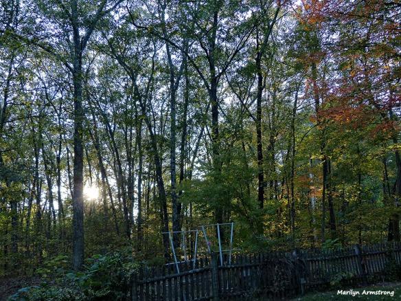 72-Autumn-100815_007