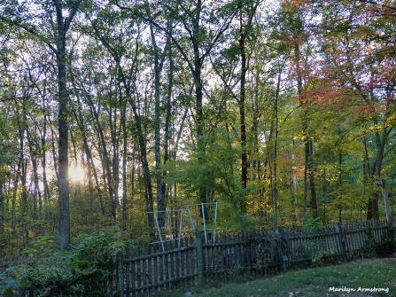 72-Autumn-100815_008