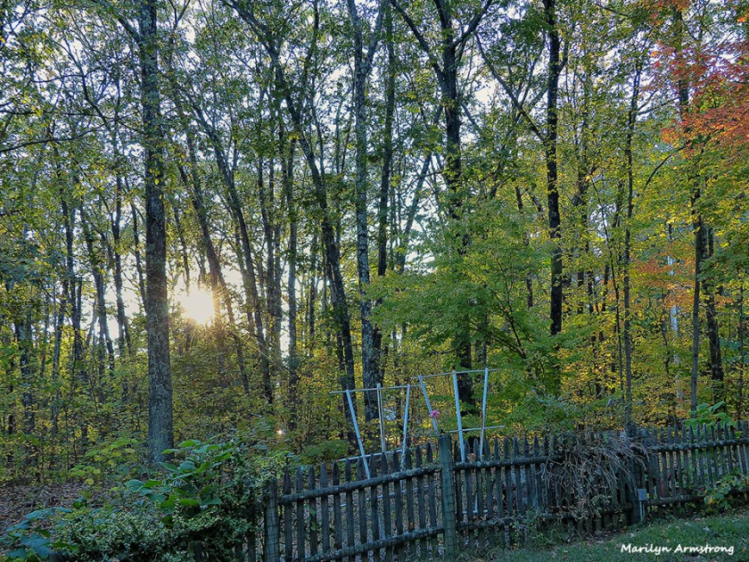 72-Autumn-100815_013