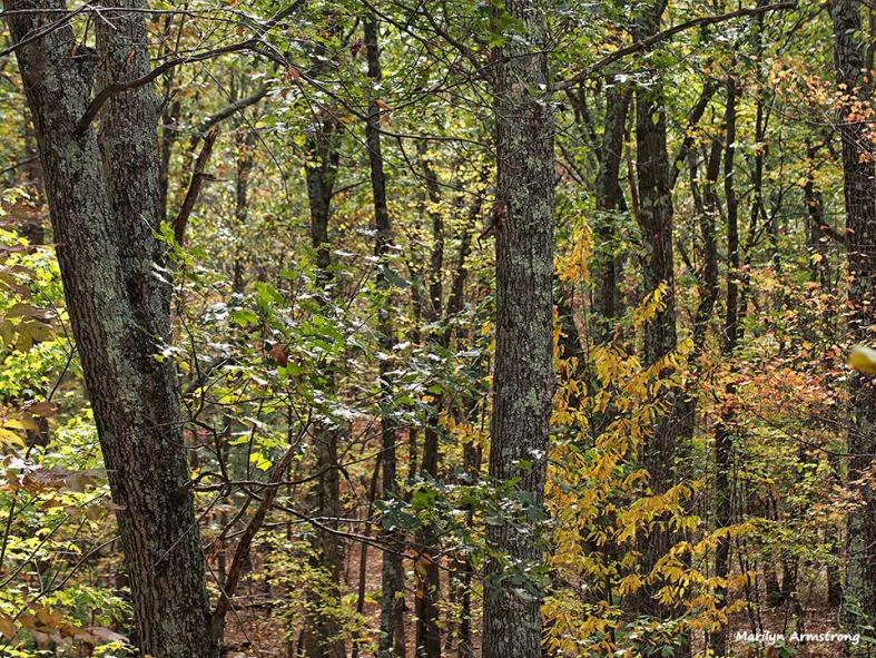 72-autumn-back-woods_03