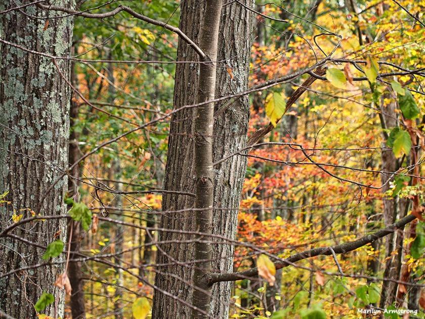 72-autumn-back-woods_09